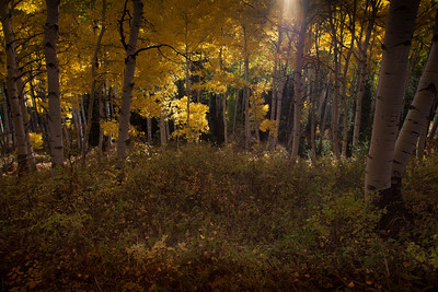 The Glowing Grove