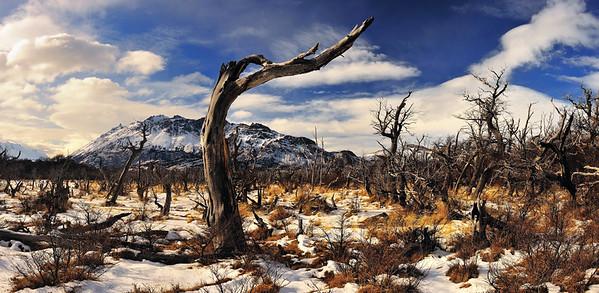 Lenga Trees in Glaciares National Park - Patagonia, Argentina
