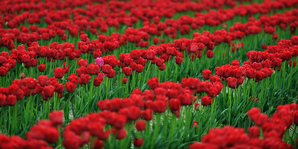 Standing Out - Skagit Valley, Washington