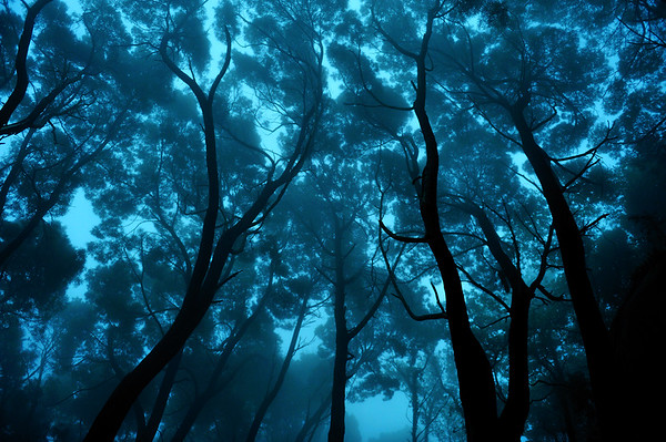 Serra De Sintra forest - Lisbon, Portugal