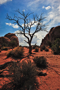 Tree Bones - Arches National Park, Utah
