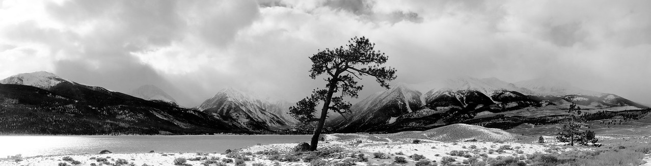 Leaning Pine at Twin Lakes