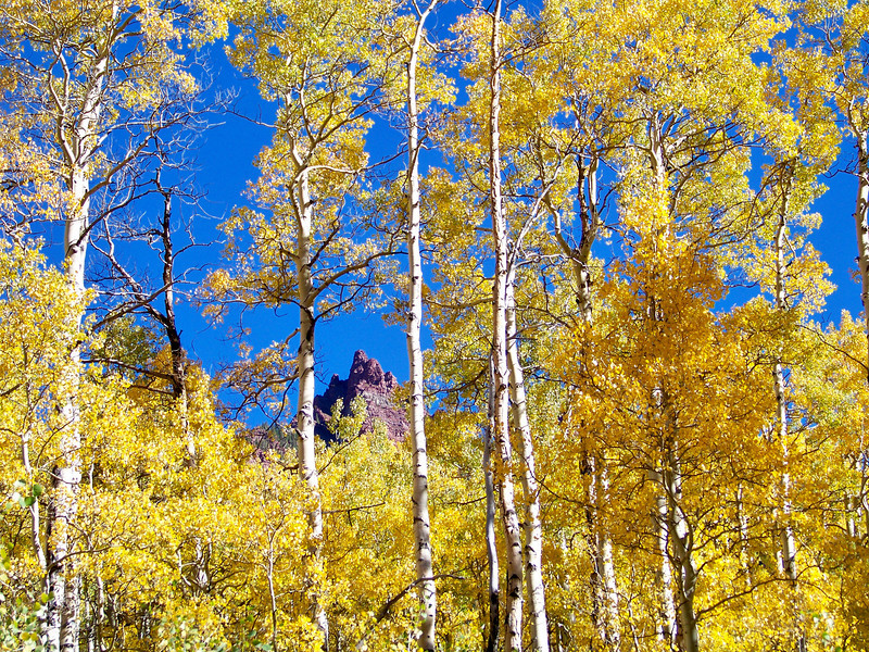 Fall Aspens frame a distant red rock spire in the Colorado Elk Range.