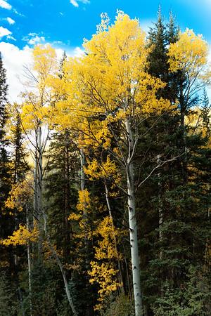 Colorado Color 2011
