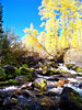 Maroon Creek in the autumn sunlight, Colorado Maroon Bells-Snowmass Wilderness