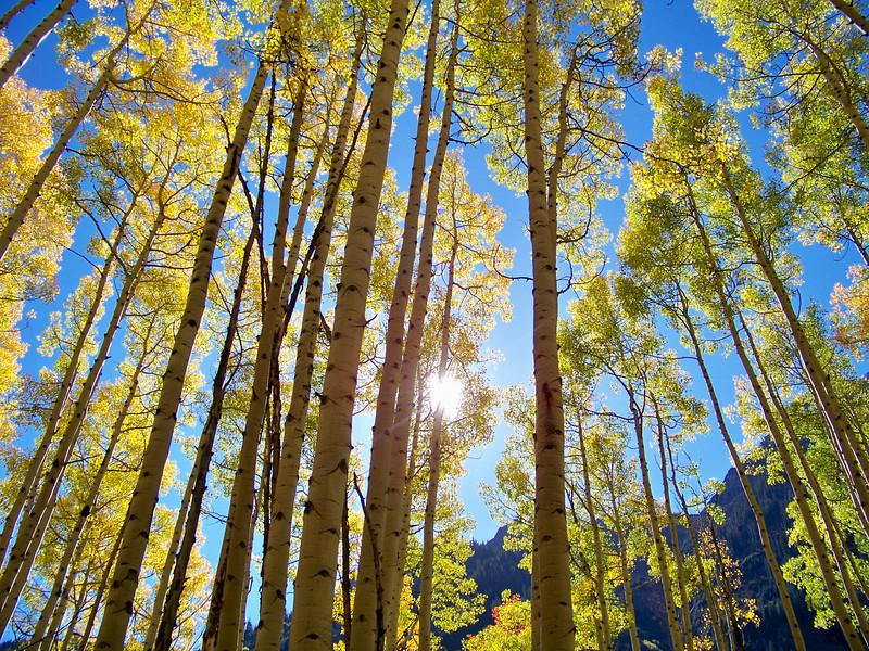 Noonday sun beams through tall aspens along Maroon Creek, Colorado Elk Range.