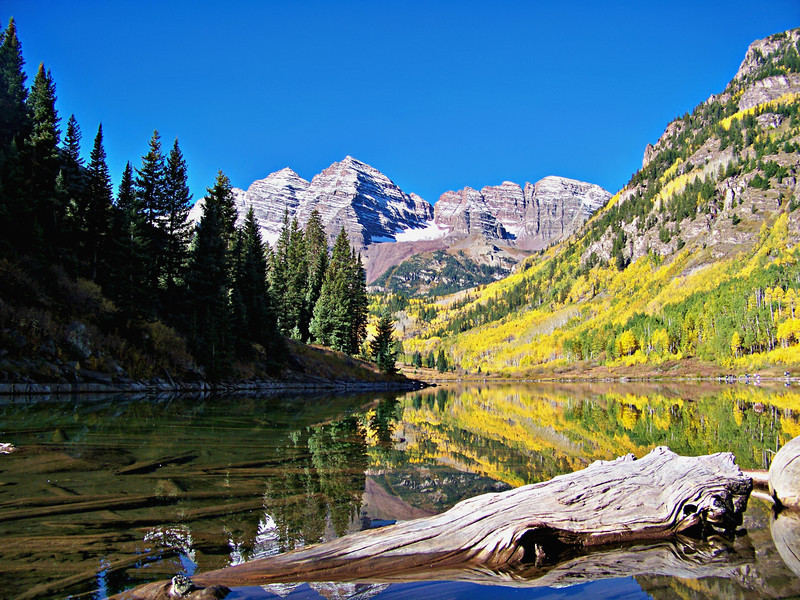 Driftwood in Maroon Lake, Colorado Maroon Bells-Snowmass Wilderness.