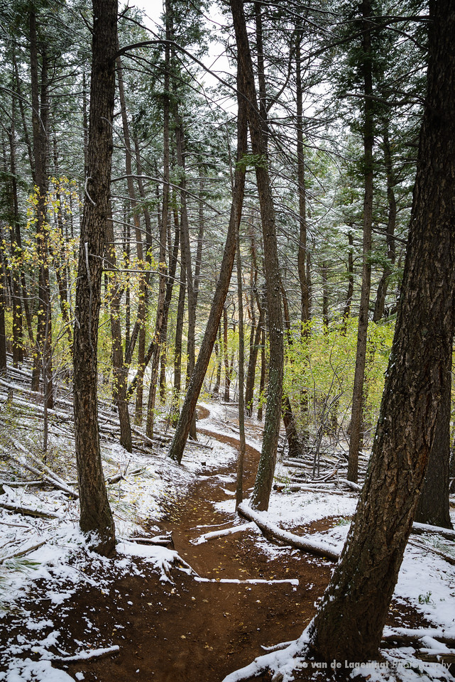 Twisty path in the enchanted winter forest