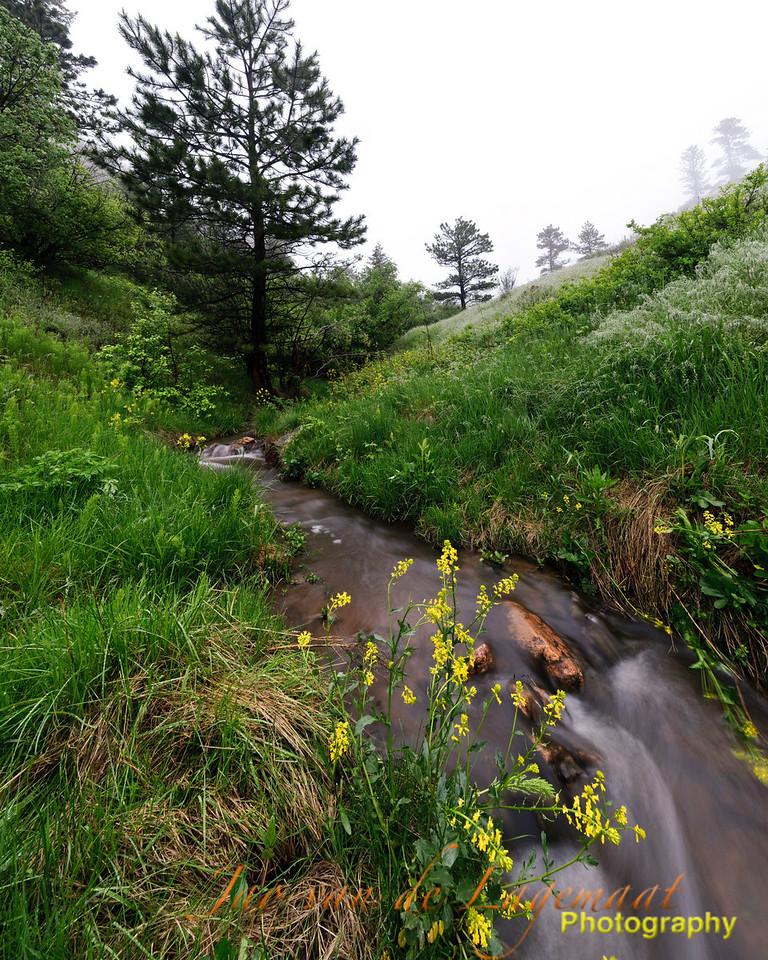 Apex creek