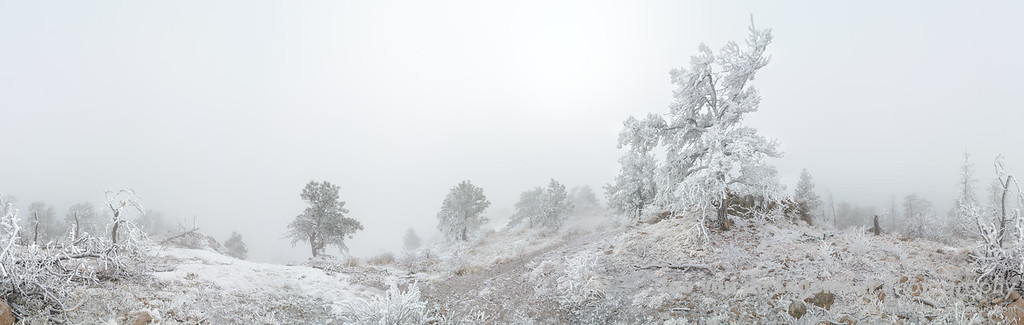 The top of Mount Galbraith covered in hoar frost