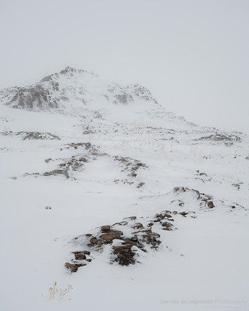 Lichen peak in snow
