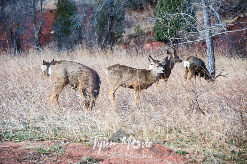 1  G Deer