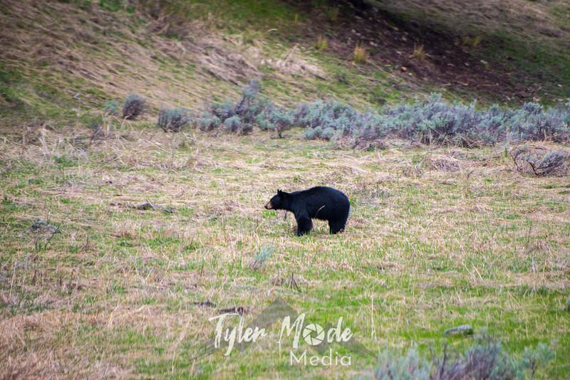 104  G Black Bear North Road