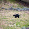 104  G Black Bear North Road