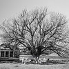 16  G House and Tree BW