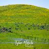 96  G Idaho Hills