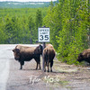8  G Bison and Sign