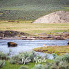 51  G Bison in River and Antelope