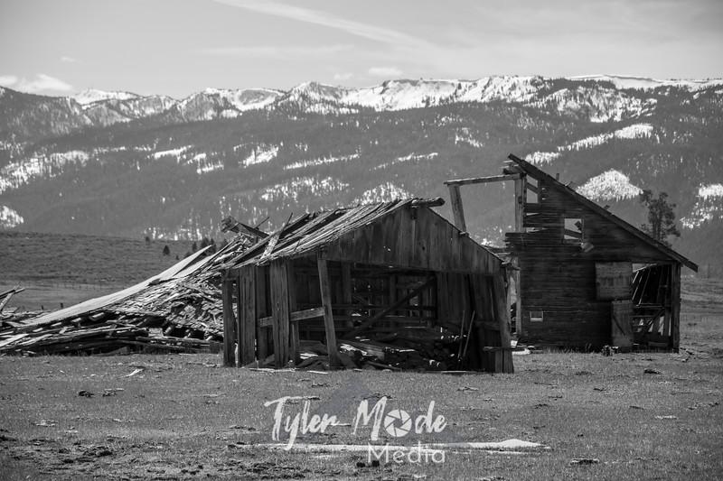 83  G Abandoned Barns BW