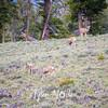 116  G Elk