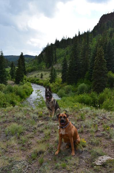 Campsite near Lake City, CO
