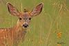 A deer taken Aug 26, 2010 near Cimmaron, CO.