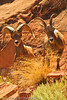 A pair of Bighorn Sheep taken Sep. 2, 2011 at the Colorado National Monument near Fruita, CO.