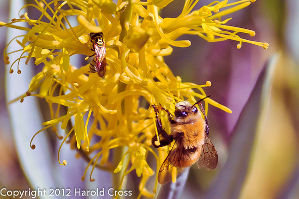 A Bee and Wasp taken May 24, 2012 near Fruita, CO.