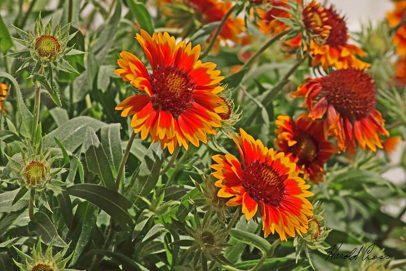 A flower taken Jun 19, 2010 in Fruita, CO.