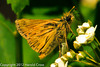 A butterfly taken May 14, 2012 in Fruita, CO.