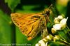 A butterfly taken May 14, 2012 in Fruita, CO.