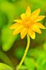 A wildflower taken Aug. 25, 2001 near Grand Mesa, CO.