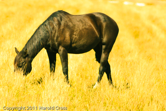 A horse taken Oct. 12, 2011 near Fruita, CO.