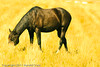 A horse taken Oct. 12, 2011 near Fruita, CO.