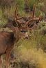 A deer taken Aug 28, 2010 near Cimmaron, CO.