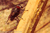 A fly taken May 12, 2012 in Fruita, CO.