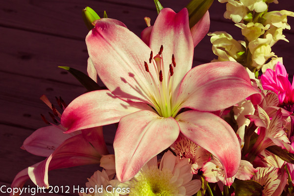 Flowers taken Mar. 29, 2012 in Fruita, CO.
