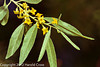 A Russian Olive flower taken May 17, 2012 in Grand Junction, CO.