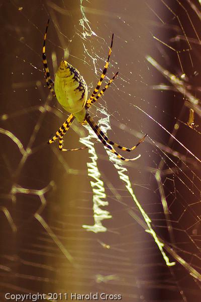 A spider taken Sep. 13, 2011 in Fruita, CO.