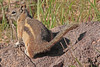 A Squirrel taken Jun 15, 2010 near Cimmaron, CO.