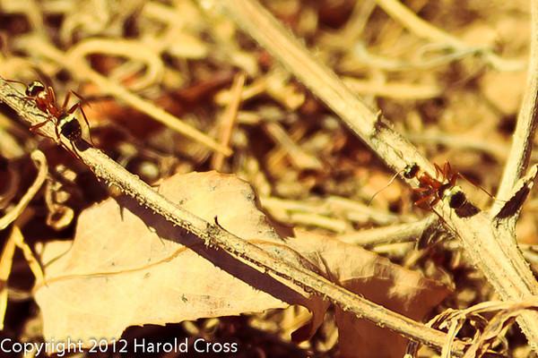 Ants taken Apr. 7, 2012 in Fruita, CO.