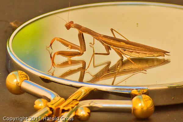A Praying Mantis taken Sep. 13, 2011 in Fruita, CO.
