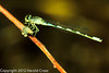 A damselfly taken May 17, 2012 in Grand Junction, CO.