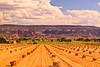 A landscape taken Aug. 19, 2011 near Fruita, CO.