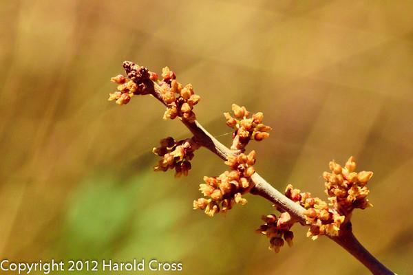A Wildflower taken Apr. 23, 2012 near Fruita, CO.