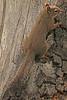 A squirrel taken Sep 5, 2010 near Cimmaron, CO.