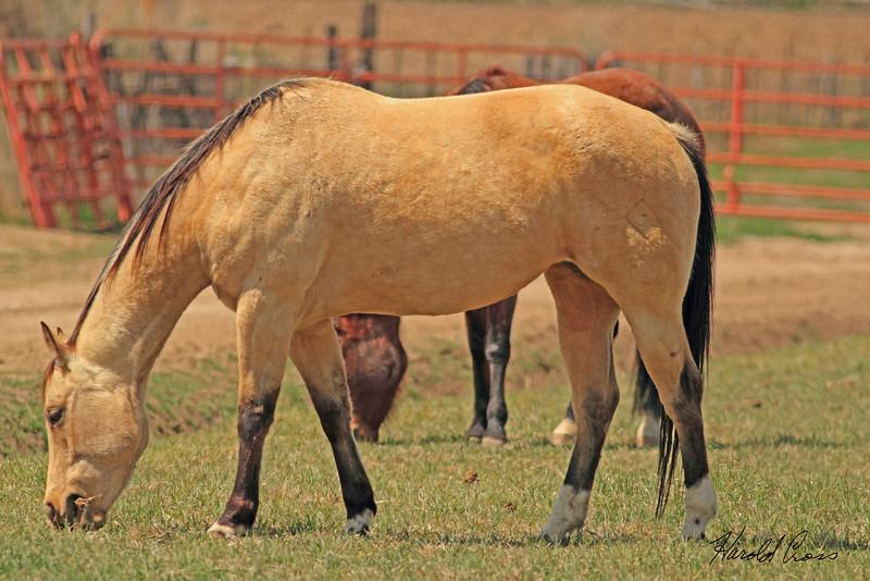 A horse taken April 15, 2011 near Fruita, CO.