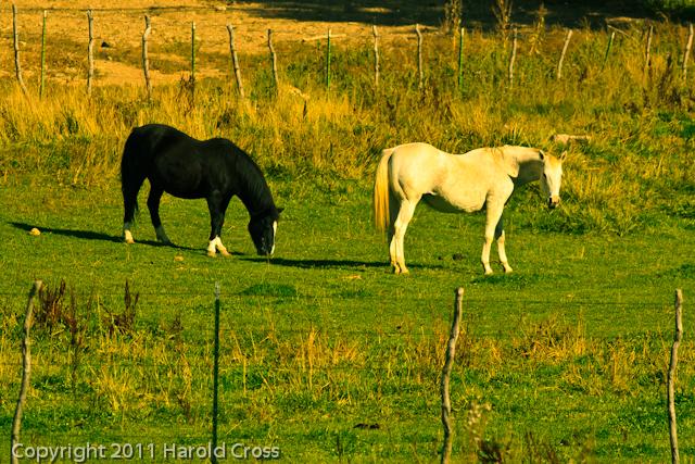 Horses taken Oct. 12, 2011 near Fruita, CO.