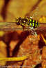 A bee taken Apr. 7, 2012 in Fruita, CO.