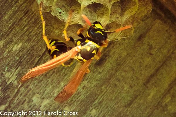 A Wasp taken May 10, 2012 in Fruita, CO.